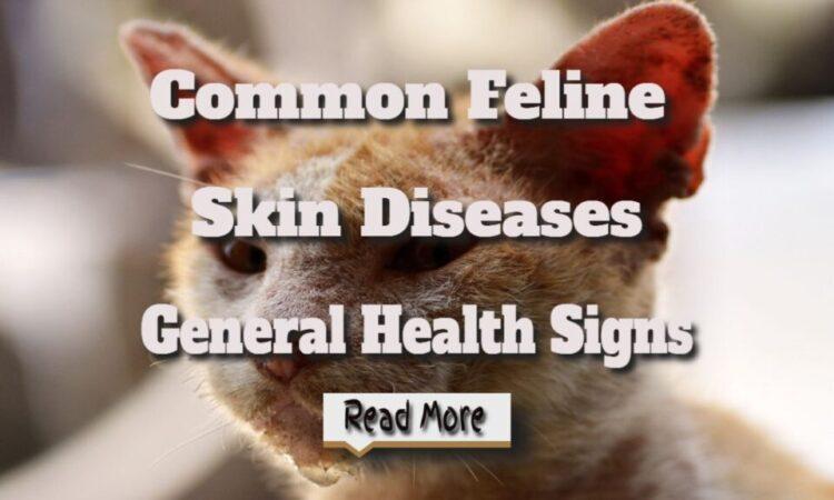 Common Feline Skin Diseases – General Health Signs