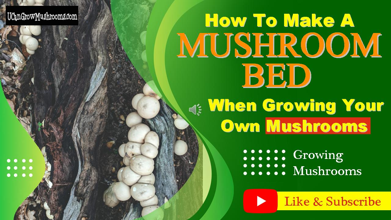 How To Make A Mushroom Bed